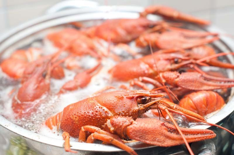 Can Pregnant Women Eat Crawfish Here Are The Best Proofs
